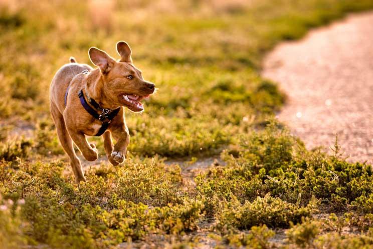 Como-y-cuando-pasear-a-tu-perro-2