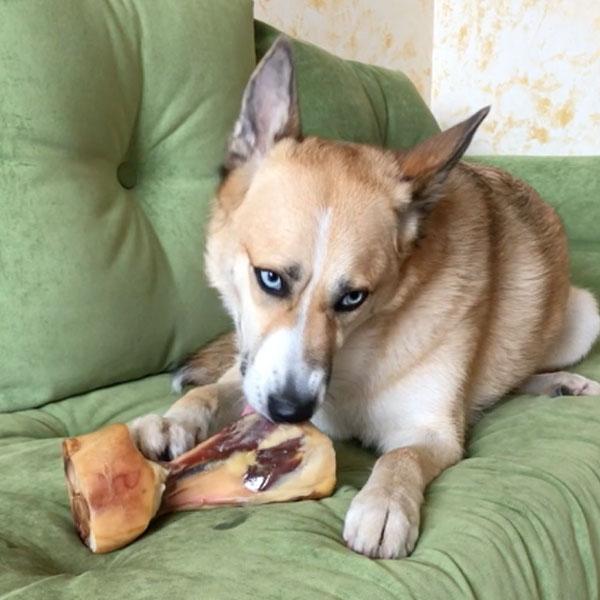 Lilushastik y Ham Bones para perros de Mediterranean Natural