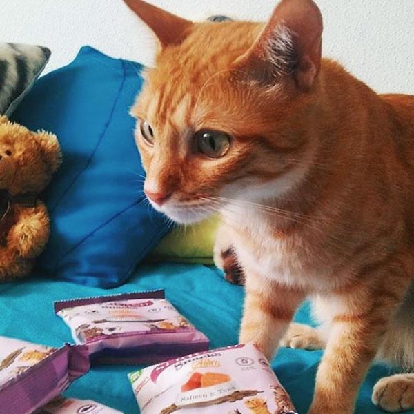 Merlín, Vera y Serrano Snacks de Mediterranean Natural para gatos