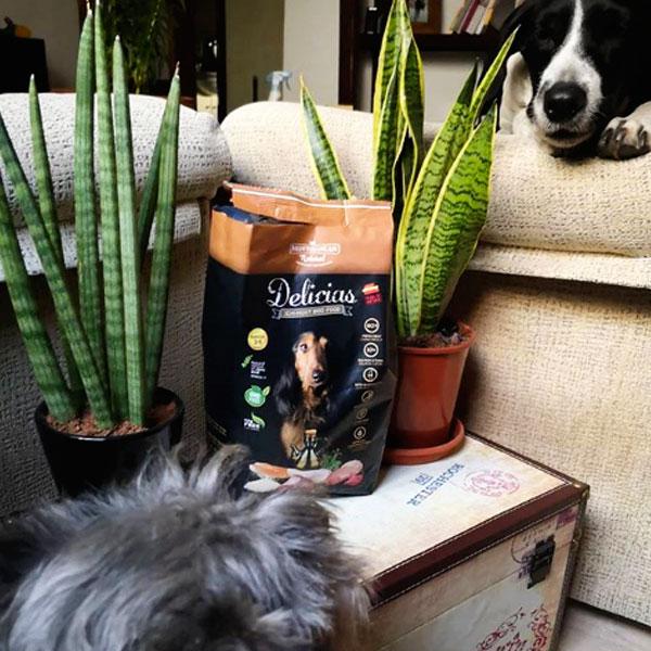 Perros con Historia y Delicias Mediterranean Natural