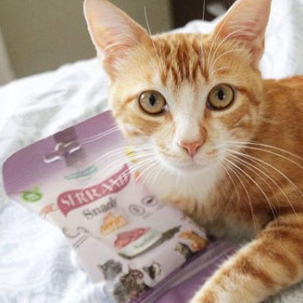 Pipo con Botas y Serrano Snacks para gatos de Mediterranean Natural