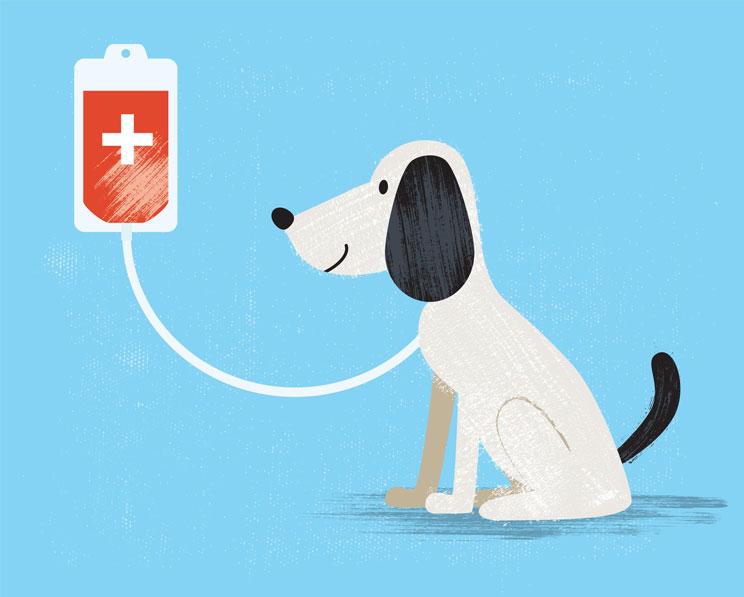Tu mascota puede ser donante de sangre ¿lo sabías?