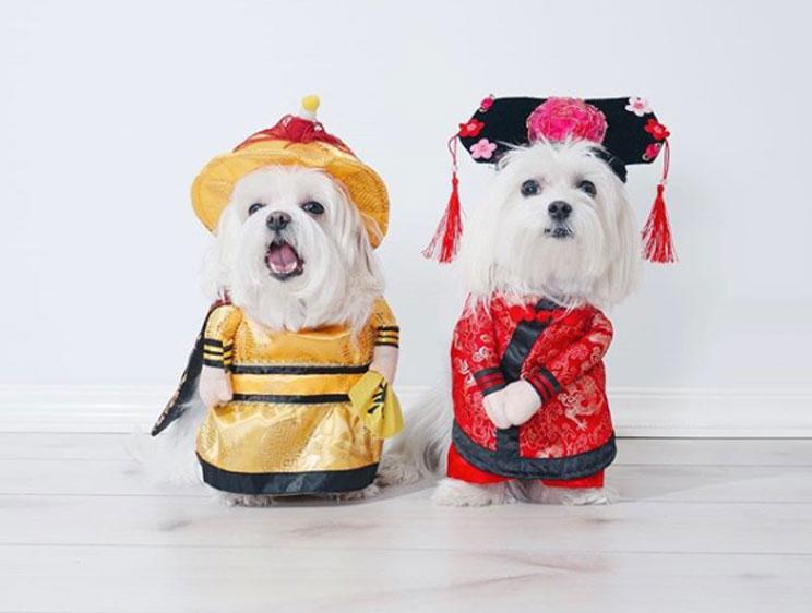 2018-curiosidades-y-significado-del-nuevo-ano-chino-del-perro-6