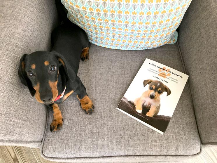 10 libros recomendados para los que amamos a los perros