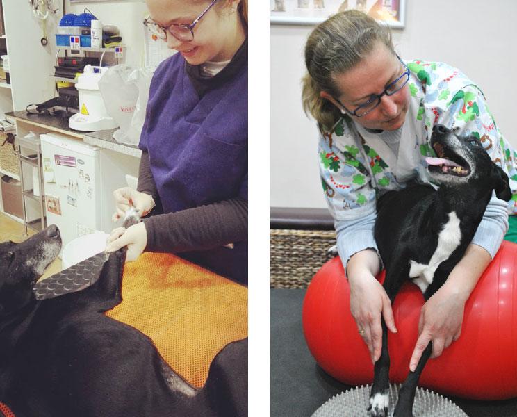 Aplicacion-de-terapias-alternativas-en-el-proceso-de-rehabilitacion-de-un-perro-3