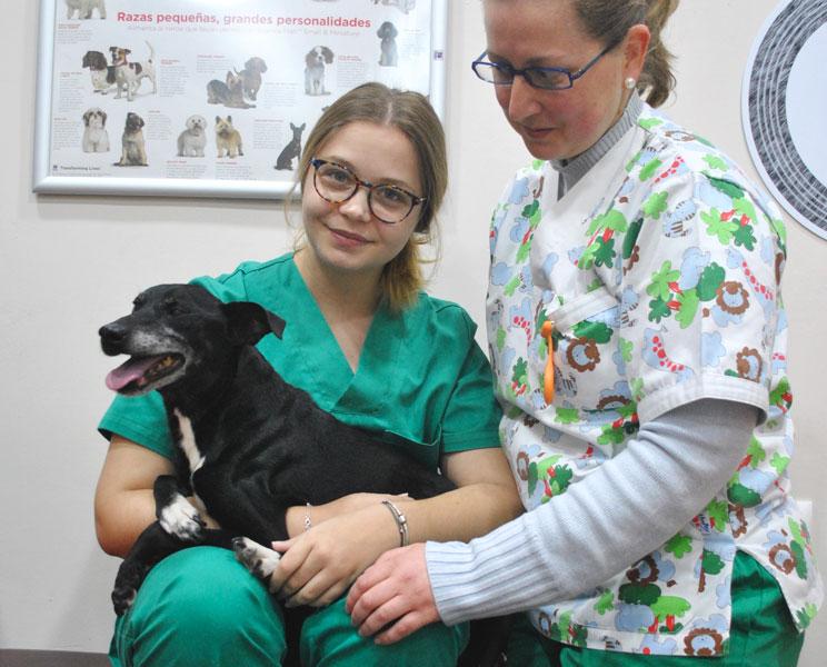 Aplicación de terapias alternativas en el proceso de rehabilitación de un perro
