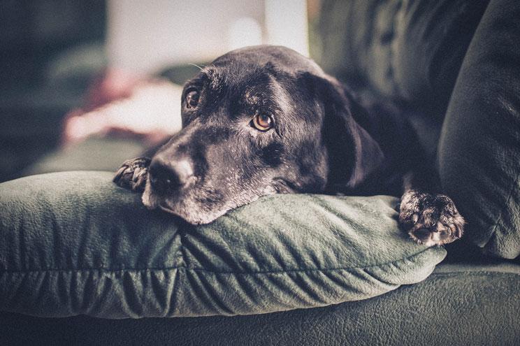 10-ejercicios-de-estimulacion-olfativa-para-perros-en-casa-2