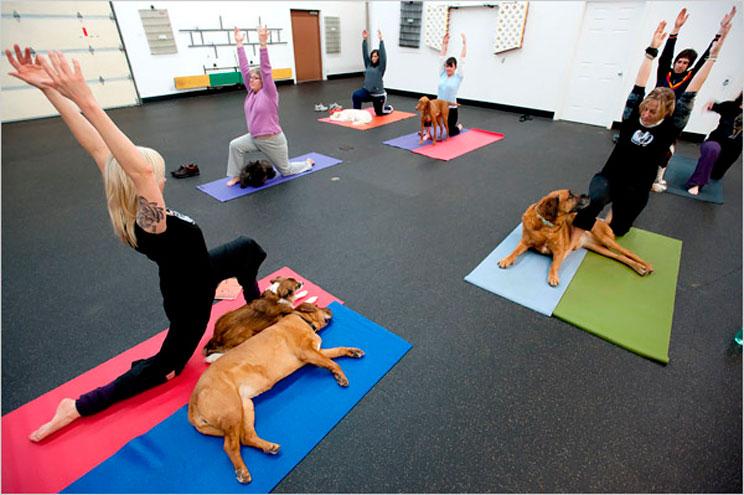 Doga: Cómo practicar Yoga con tu perro