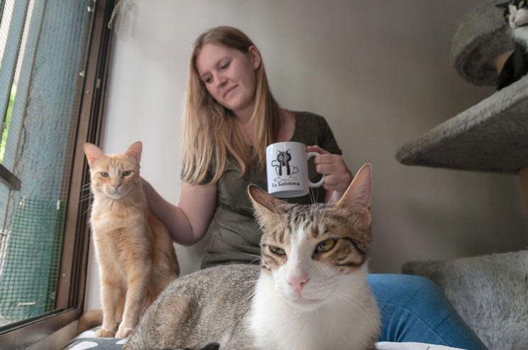 Gatos en adopción: La Gatoteca