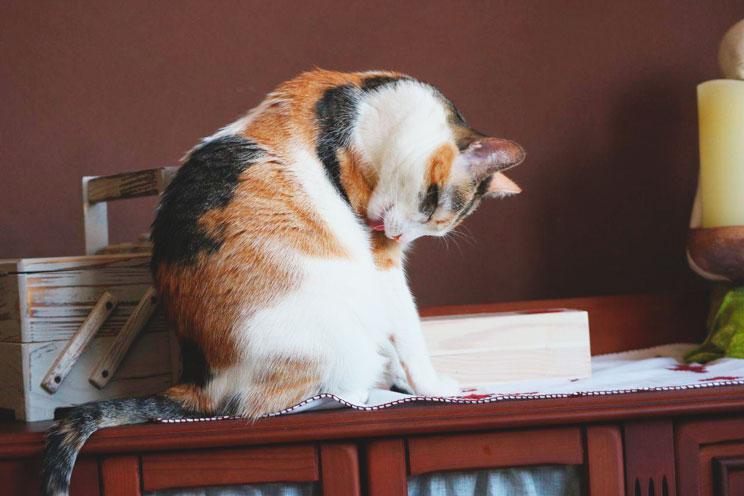 Qué son y cómo evitar las bolas de pelo en gatos
