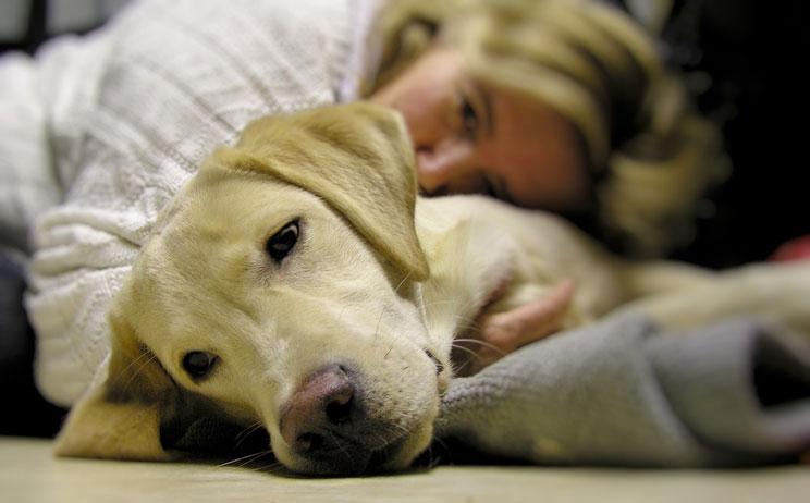 Los perros son sensibles a nuestro llanto y actúan para ayudarnos
