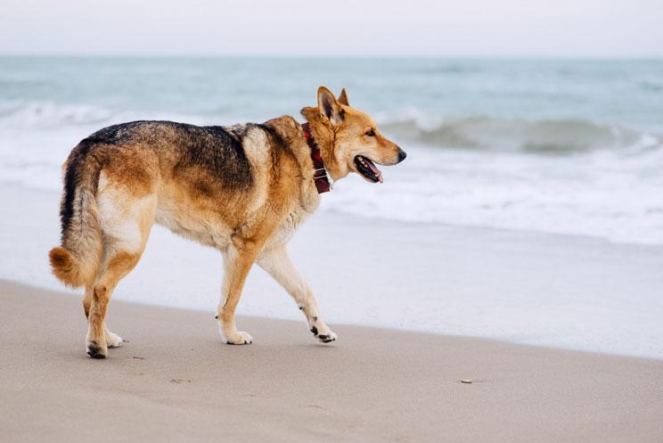 Protege-a-tu-perro-del-sol-en-verano-su-salud-lo-agradecera-2