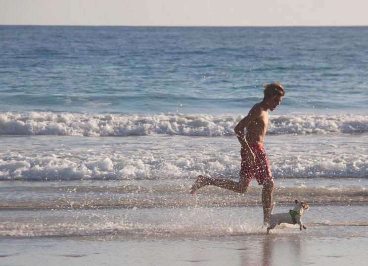 Protege-a-tu-perro-del-sol-en-verano-su-salud-lo-agradecera-3