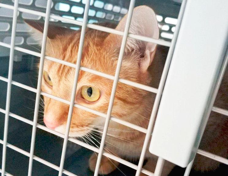¿Qué accesorios necesita un gato a su llegada a casa?