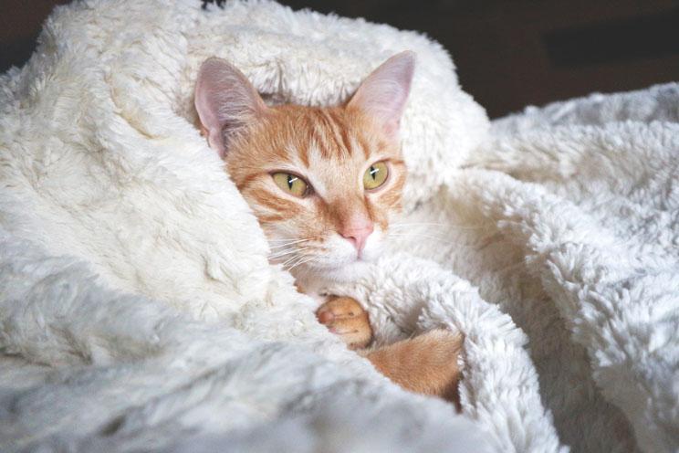 Que-accesorios-necesita-un-gato-a-su-llegada-a-casa-6