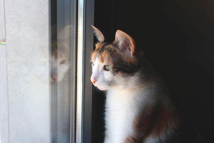 Qué debes valorar antes de adoptar un gato