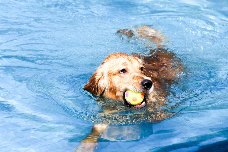 ¡Cuidado con el agua! Un mal uso perjudica a tu perro