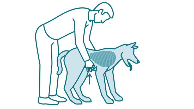 Que-hacer-si-mi-perro-se-atraganta-y-no-respira-maniobra-Heimlich-3