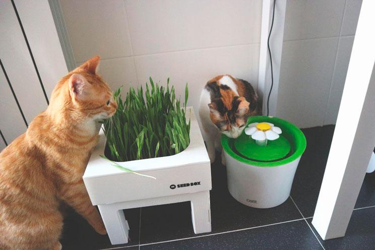 Tu gato sufre con las altas temperaturas ¡Aprende cómo ayudarlo!