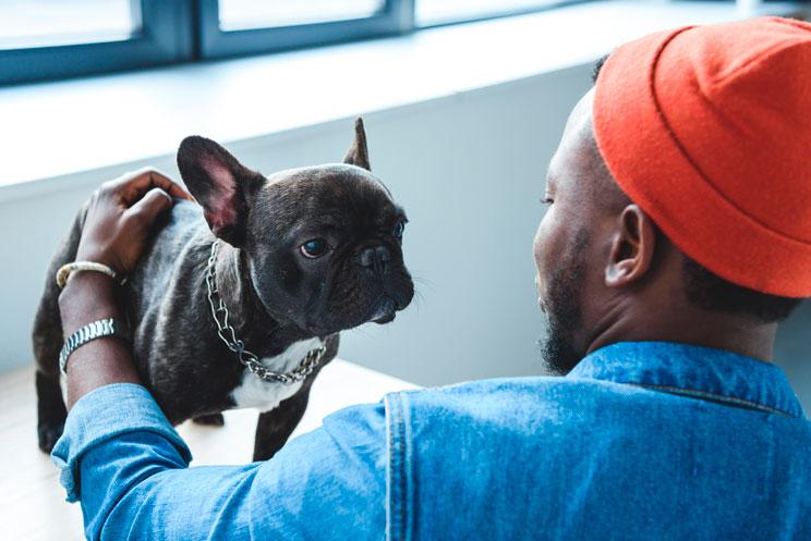 Cómo evaluar el temperamento de un cachorro: Test de Campbell