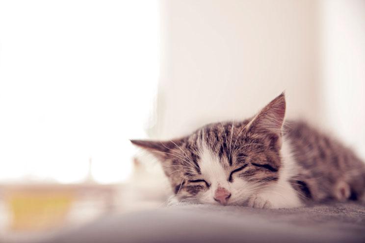 La-importancia-de-una-buena-hidratacion-para-nuestros-gatos-2