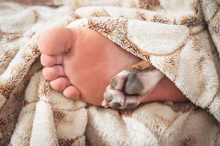 Cómo cuidar las almohadillas del perro: Evita que se sequen y agrieten
