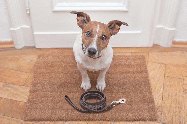 El paseo del perro: 3 funciones básicas