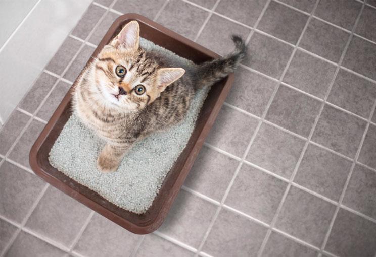 ¿Por qué mi gato orina fuera del arenero?