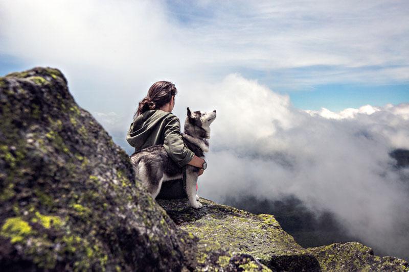Actividades de ocio con perros para el fin de semana