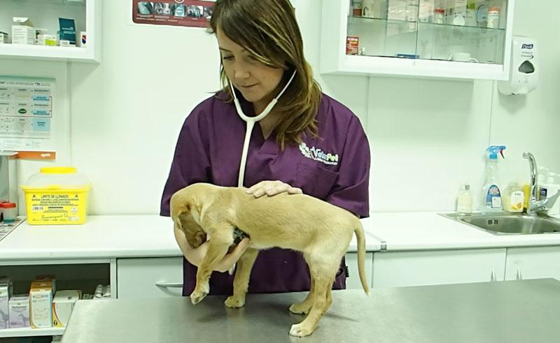 Consulta veterinaria: todo lo que debes saber sobre salud y cuidados de tu perro