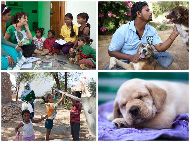 TOLFA Hospital: lucha contra la triste realidad de los perros callejeros en La India