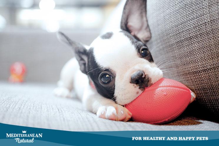 Todo lo que debes saber antes de tener un cachorro en la familia