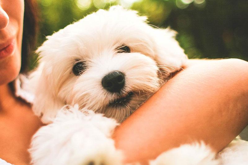 Todo lo que debes tener en cuenta antes de incorporar un cachorro a tu familia