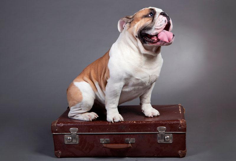 15 cosas imprescindibles que hay que llevar si viajas con perro