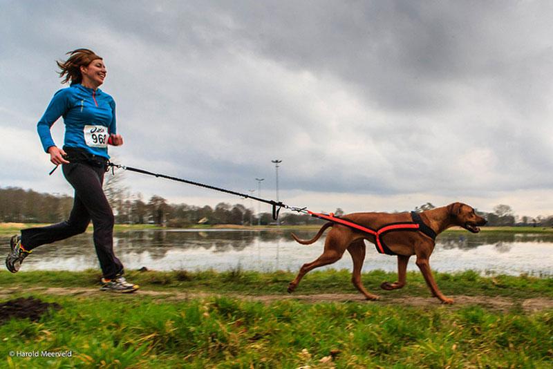 Actividades con perros, ocio con perros, deporte, canicross