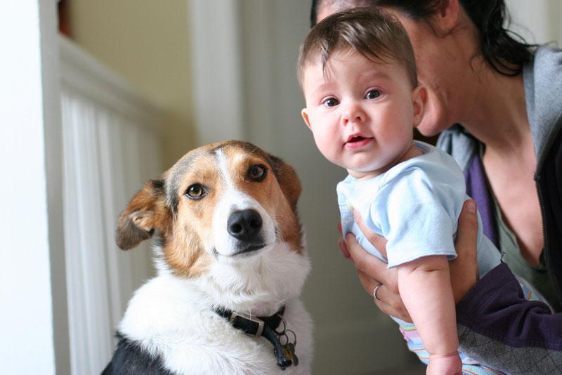 ventajas-tener-perro