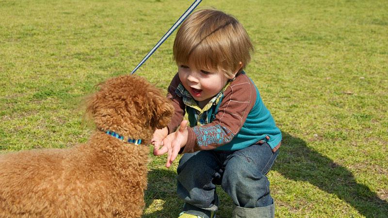 8 razones por las que un niño debe tener un perro en casa