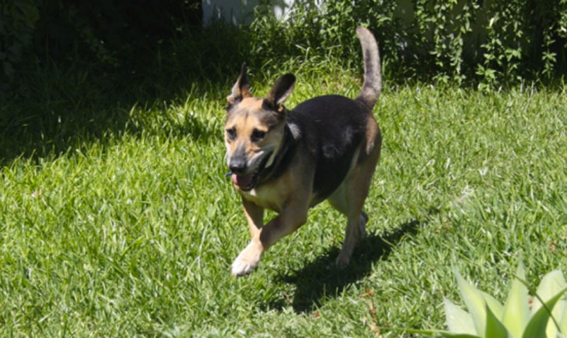 Perros en adopción: Noa, la veterana de SOFIA, Refigio-Escuela