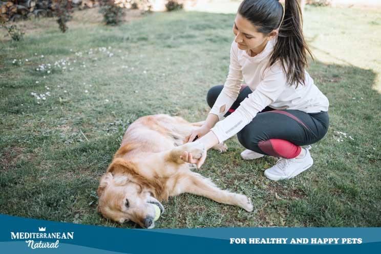 ¿Cómo tomar el pulso a un perro?