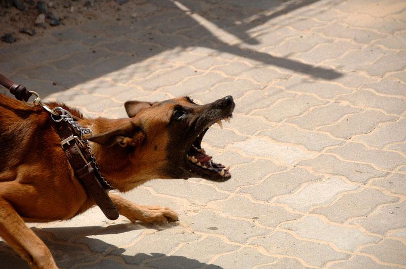 perro-agresivo-no-lo-determina-su-raza