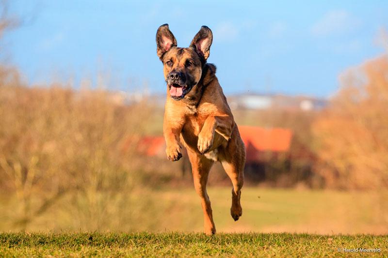 Adiestrar perros enérgicos
