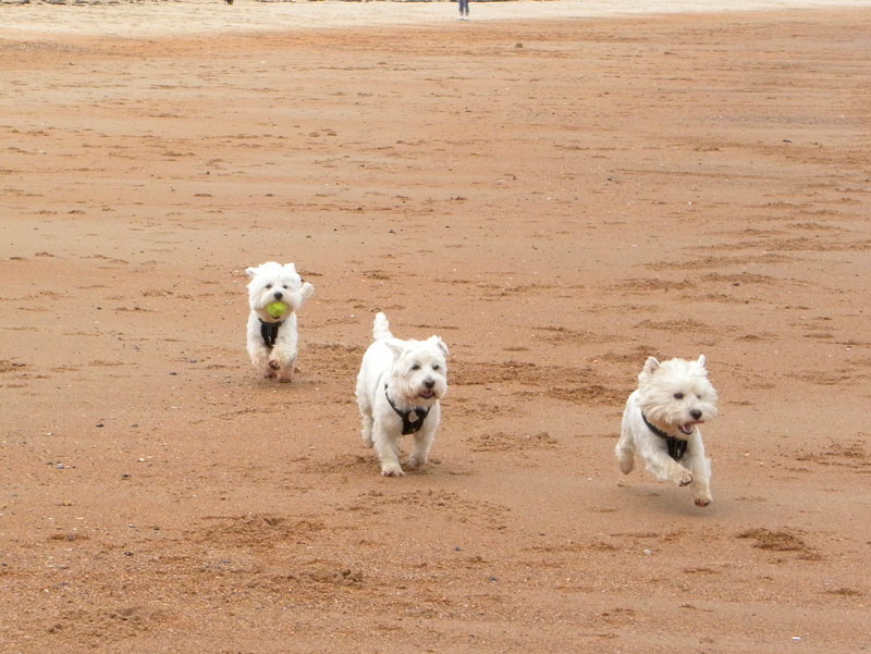 15 consejos playa dogfriendly