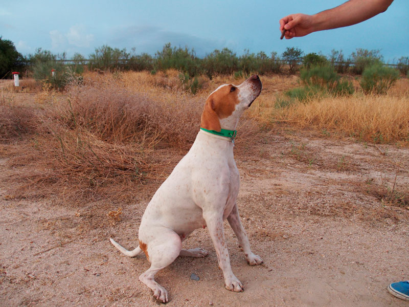 golosinas-snacks-premios-adiestramiento-canino