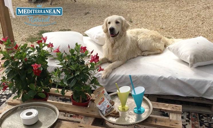 Ideas para organizar una fiesta para perros