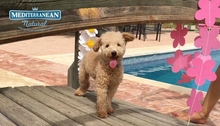 ideas-para-organizar-una-fiesta-para-perros-5