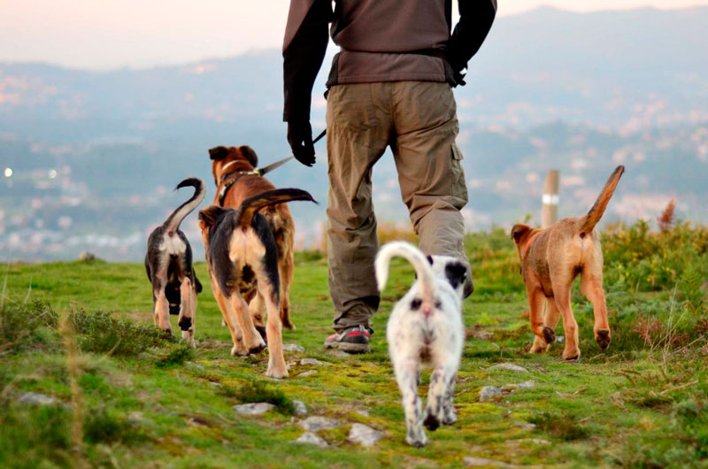 perriturismo-actividades-con-perro-senderismo