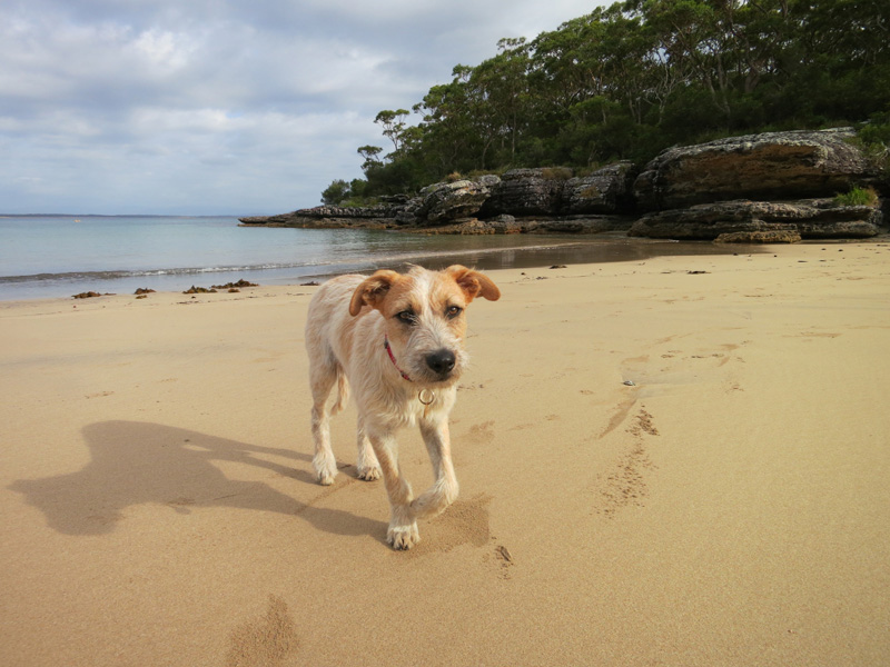 15 consejos útiles si vas a una playa para perros