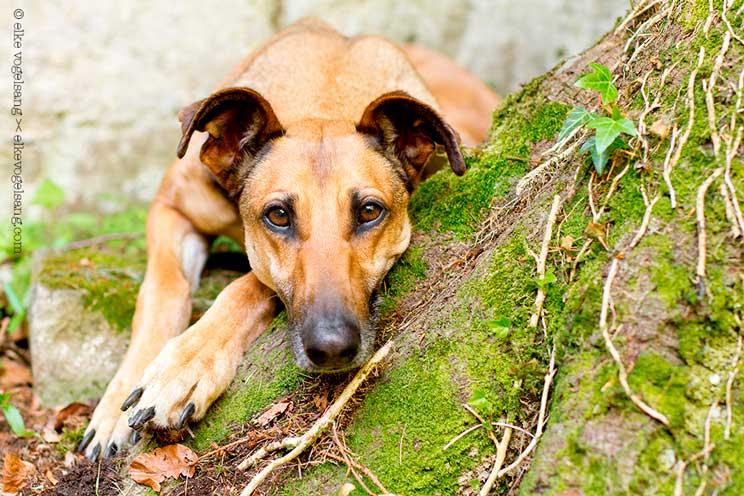 Elke Vogelsang: la fotógrafa de perros que caza emociones
