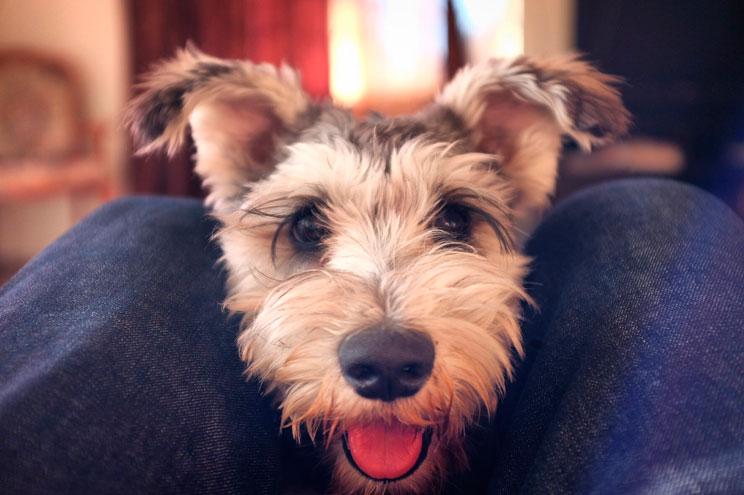 Elegir un perro por su personalidad