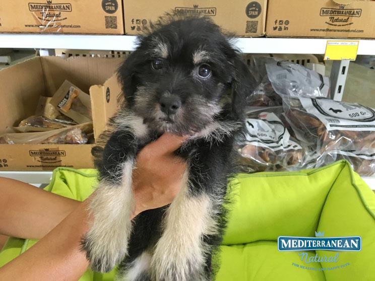perros-en-adopcion-un-monstruo-viene-a-verme-11